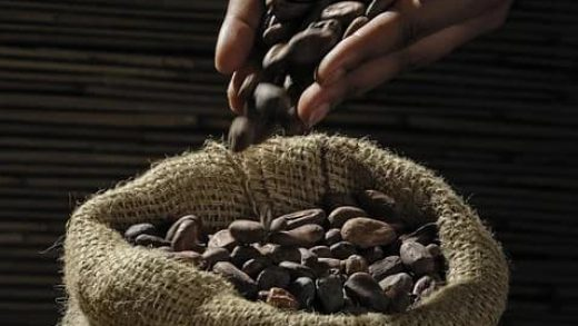 En Çok Kakao Üreten Ülkeler