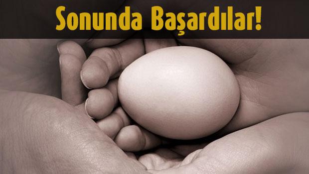 Yumurta Hücreleri Yeniliyor